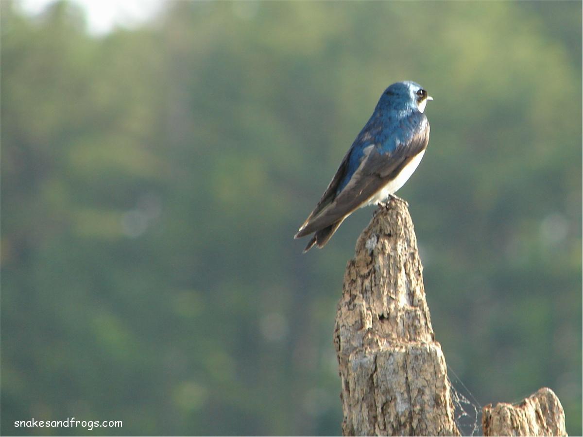Hilton Head Island Birds Pictures